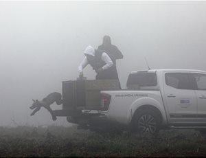 Ο ΑΡΚΤΟΥΡΟΣ επέστρεψε στο φυσικό περιβάλλον πέντε ορφανά αρκουδάκια thumb