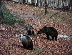 Ξύπνησαν οι αρκούδες στο Καταφύγιο thumb