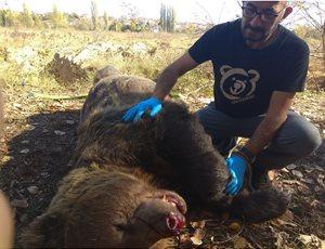 Αρκούδα 390 κιλών σκοτώθηκε σε τροχαίο ατύχημα thumb