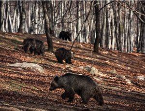 Ξύπνησαν οι αρκούδες από το χειμέριο λήθαργο thumb
