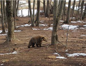 Ξύπνησαν οι αρκούδες στο Καταφύγιο και μας φέρνουν την άνοιξη thumb