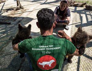 Σωτηρία από τον ΑΡΚΤΟΥΡΟ για δύο ορφανά αρκουδάκια από το Μαυροβούνιο thumb