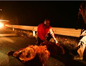 Δεύτερο θανατηφόρο τροχαίο ατύχημα στο ίδιο σημείο μέσα σε 24 ώρες thumb