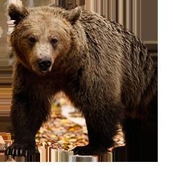 μεγάλο πουλί αρκούδα μαύρο ενηλίκων σεξ πορνό