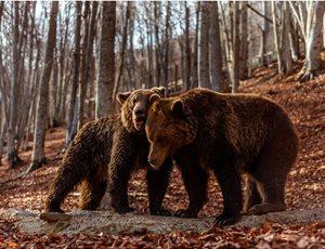 Οι αρκούδες ξύπνησαν και σας περιμένουν thumb