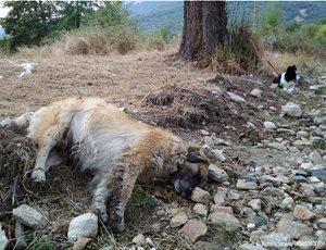 Μαζικά κρούσματα φόλας: Τουλάχιστον 50 σκυλιά νεκρά στην περιοχή Αμύνταιου - Φλώρινας thumb