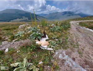Τρεις πελεκάνοι νεκροί μετά από πρόσκρουση σε ανεμογεννήτριες στον Βαρνούντα thumb
